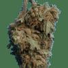 GMO Cookies Cannabidiol bud