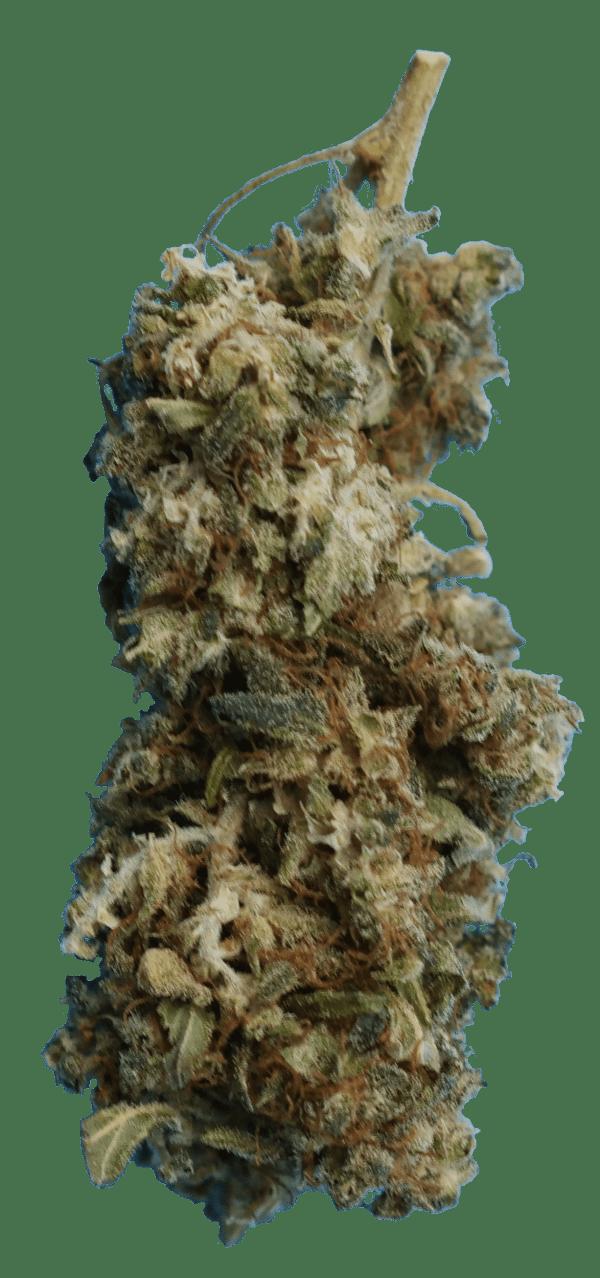 Limoncello Cannabidiol bud