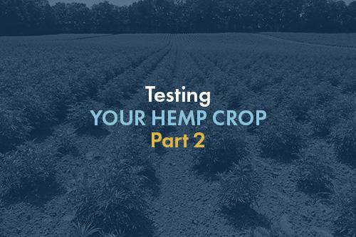 Testing Your Hemp Crop - Part 2 | HempLogic