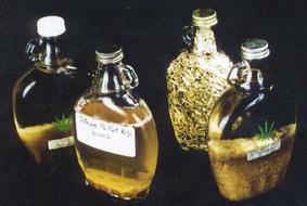 Pulp Pellet Bottles