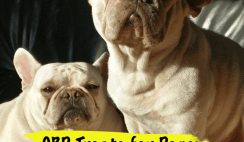 cbd dogs