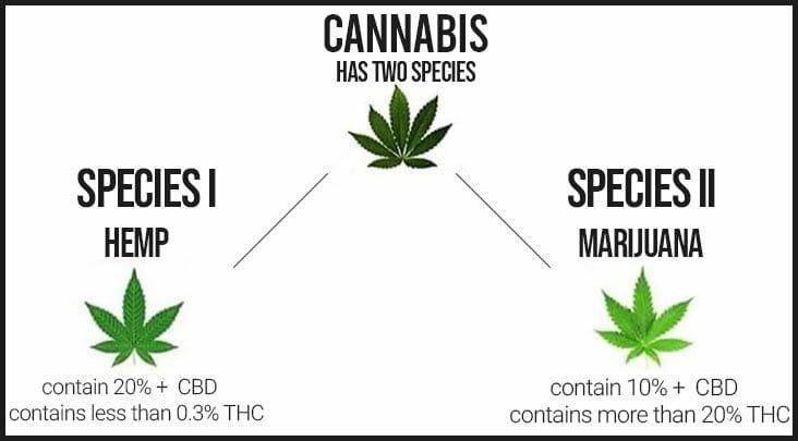 Difference between cannabis, hemp, and marijuana