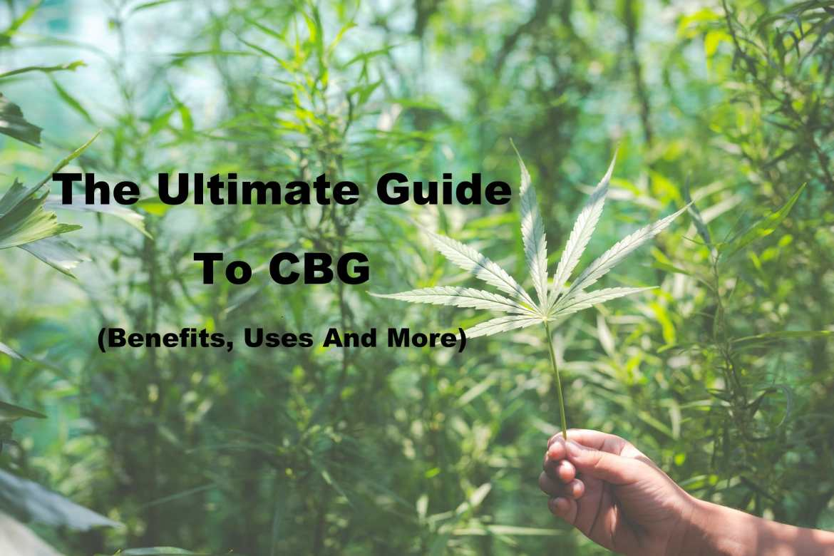 What Is CBG And Can It Compete With CBD? 3