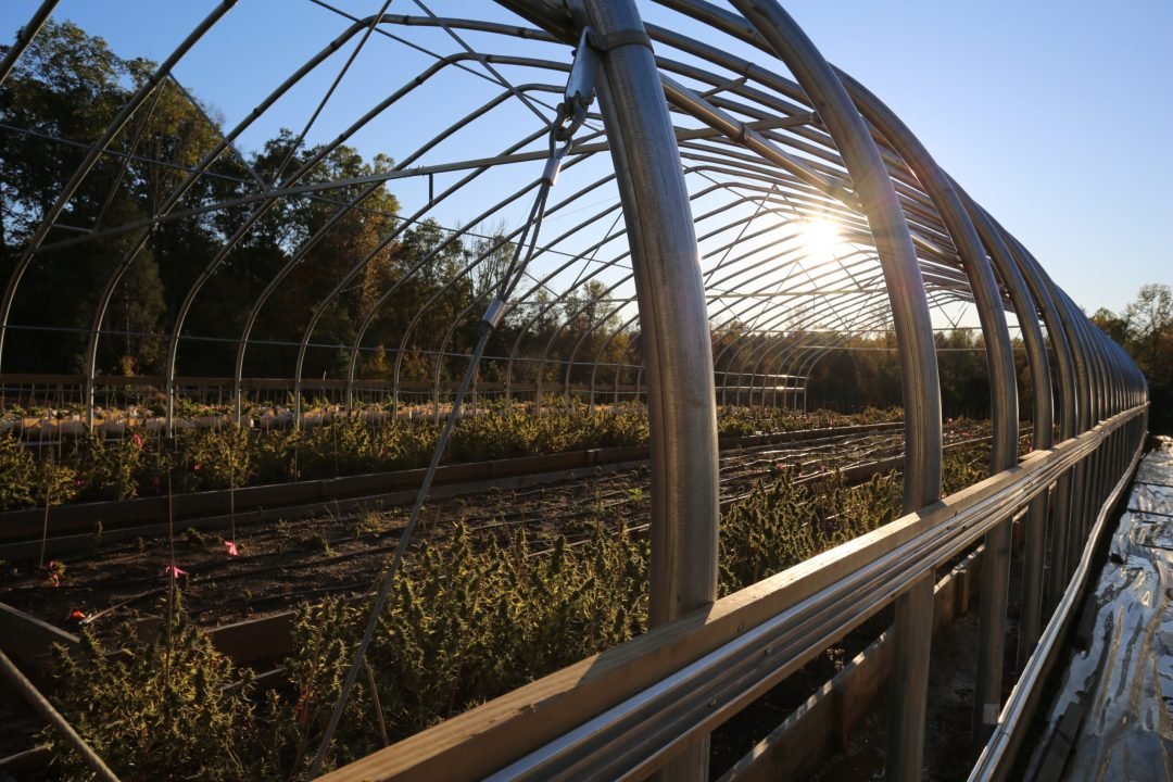 A wider shot of one of the green houses as the sun begins to fade in the background.
