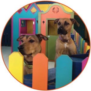 Two pooch patrons stand in a colorful play pen at Shaggy Chic.