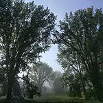 Stevige bossenwandeling door Oostelijk Flevoland