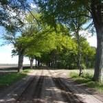 In vrijheid achterom Hoogeveen wandelen