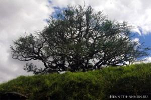 matamata01 oak 300x200 Новая Зеландия, часть 1: Матамата (Хоббитон)