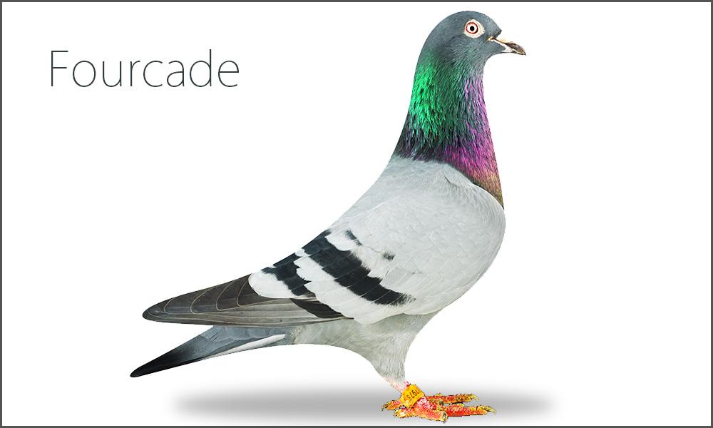 Fourcade