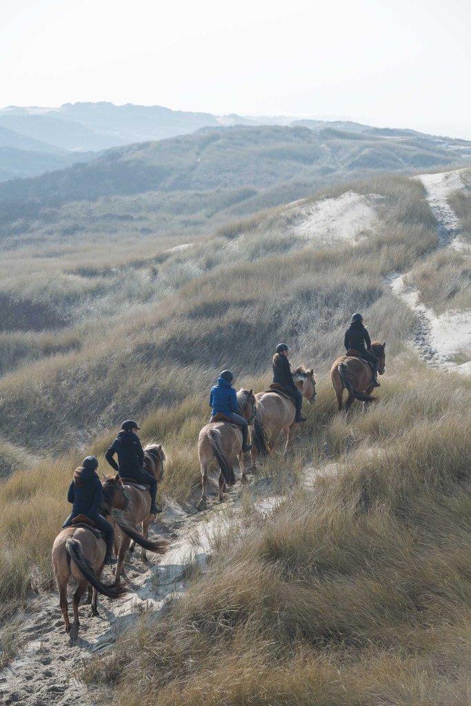 Balade dans les dunes de la Baie d'Authie avec les chevaux Henson