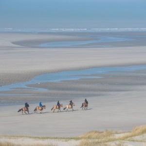 Balade sur la plage de la Baie d'Authie avec les chevaux Henson