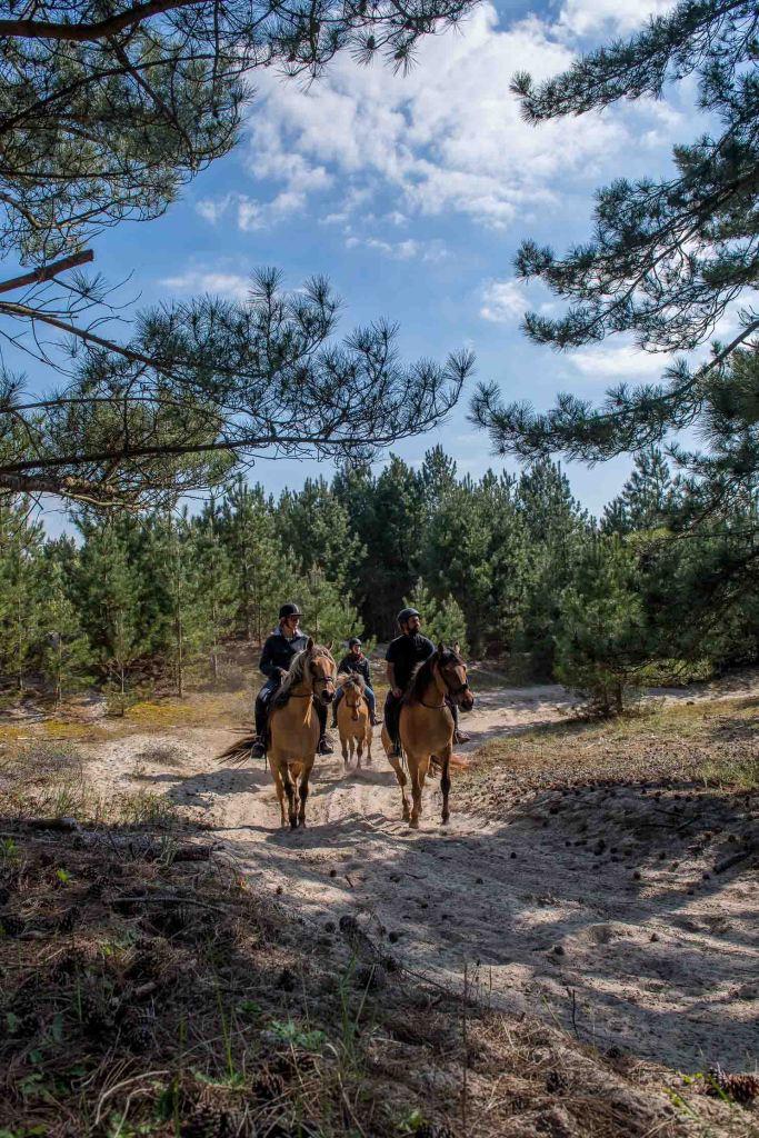 Balade avec les chevaux Henson dans le Domaine du Marquenterre