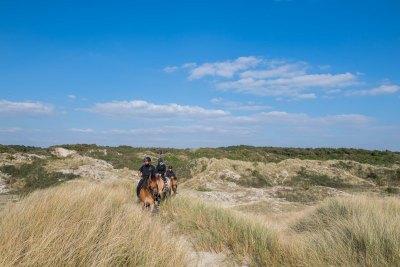 Balade avec les chevaux Henson dans les dunes de la Baie de Somme