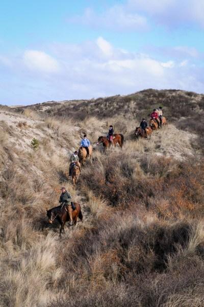 Balade automnale avec les chevaux Henson en Marquenterre