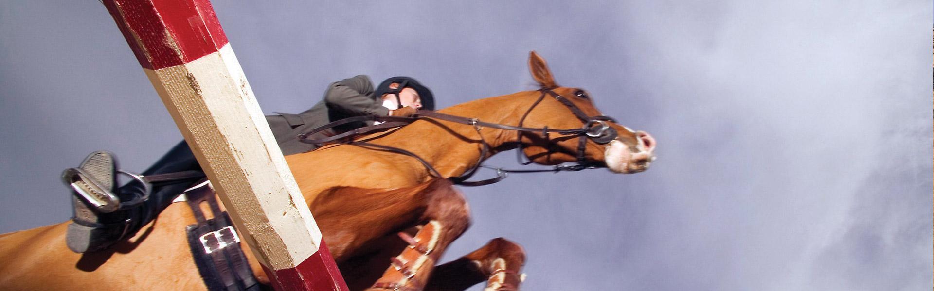 htbta_mainbanner_equestrian
