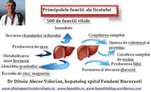 functiile-ficatului