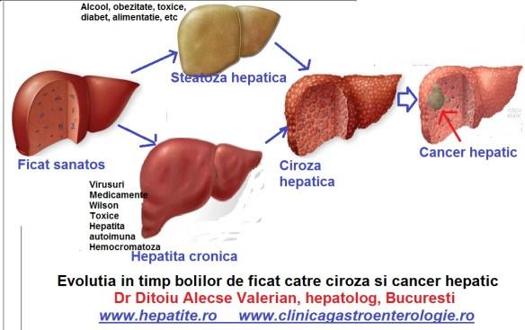 Regenerarea ficatului