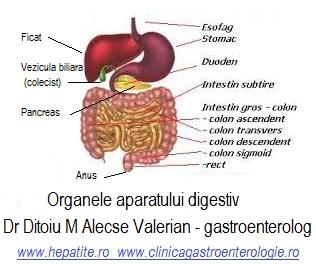 Organele digestive