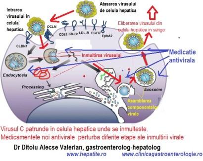 Inmultirea virusului C