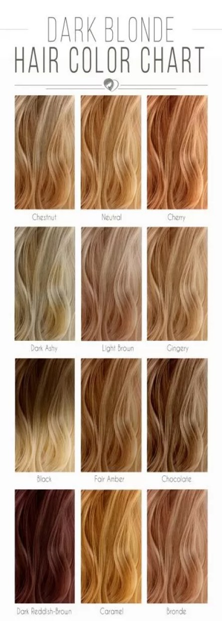 blonde-hair-color-chart-dark-366x1024 (1)