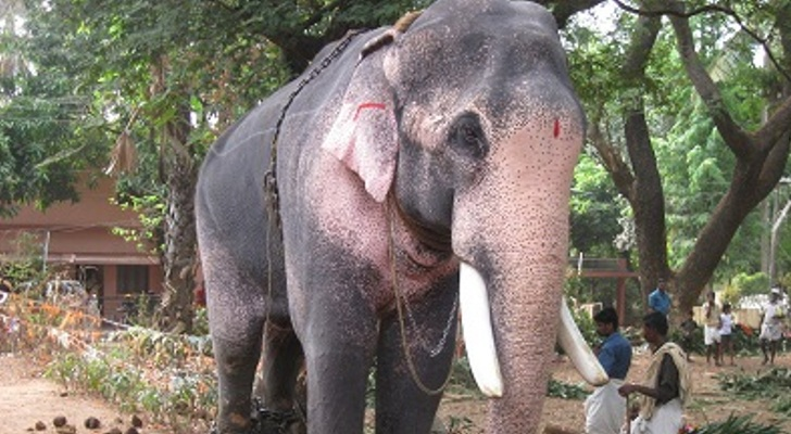 Elephant-Charged-With-Murder-Gets-Released-on-Bail