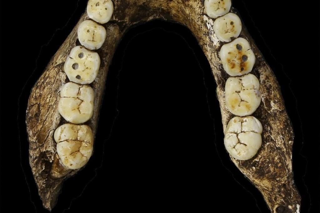 Lower jaw of Homo naledi