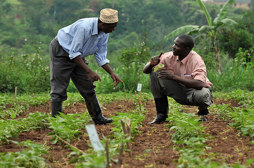 Image result for Nigerian farmers urged to embrace organic farming
