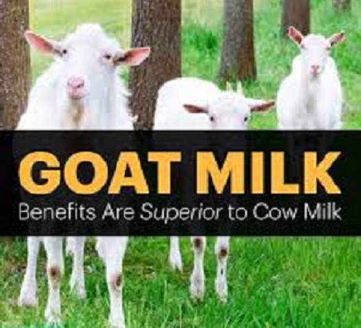 Goat milk superior to cow milk
