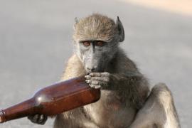 monkey chewing bottle