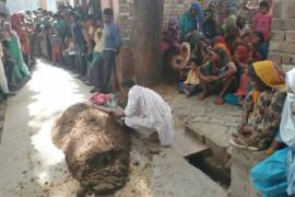 Woman buried alive in cow dung by snake charmer