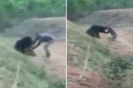 bear mauls taxi driver in india