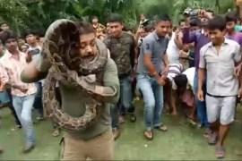 python-selfie_forest-ranger