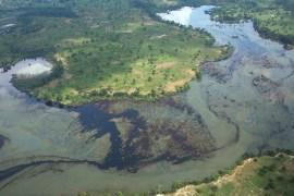 Nigerian environment