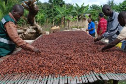ghana-set-for-850000-tonnes-of-cocoa-production