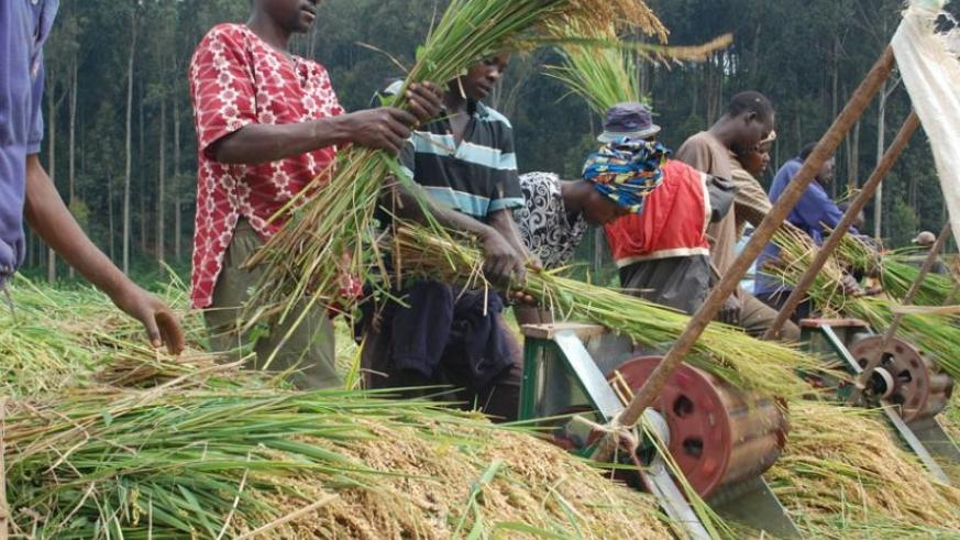 Cbn, Rifan Task Rice Farmers In C' River On Loan Repayment