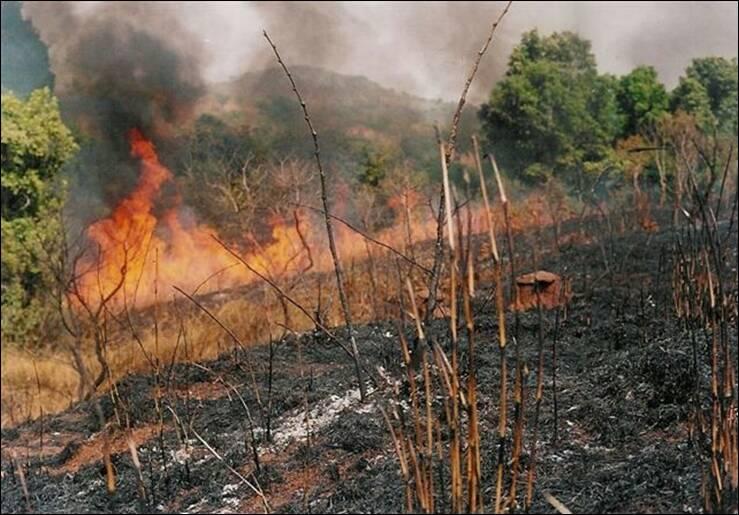 Bush burning