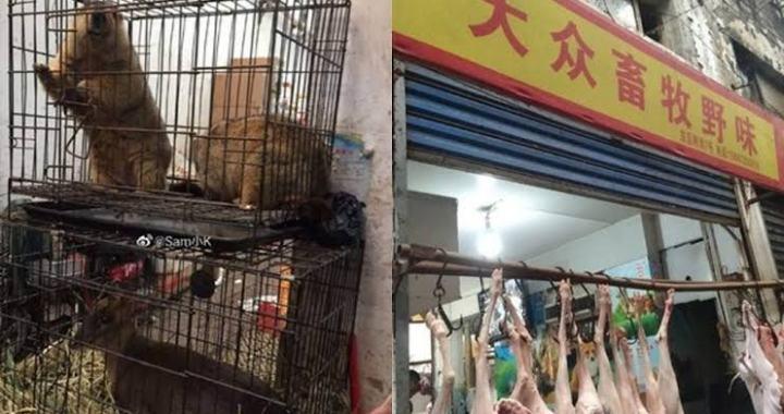 Coronavirus: Chinese Govt bans trade, Consumption of wild animals