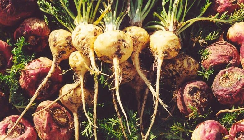Maca Root - Health Benefits and Side Effects