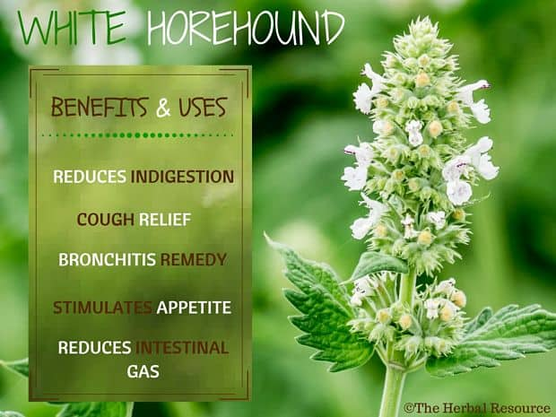 white horehound benefits
