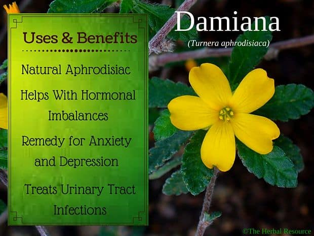 damiana herb - side effects, uses and benefits, Skeleton