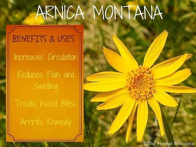 arnica montana benefits