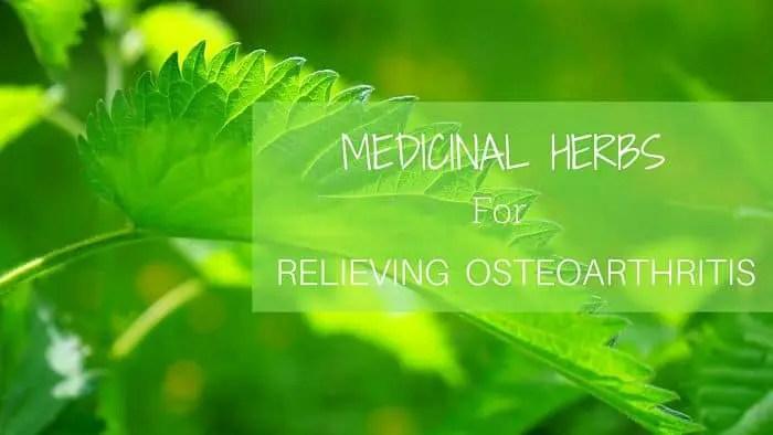 Medicinal Herbs for Osteoarthritis