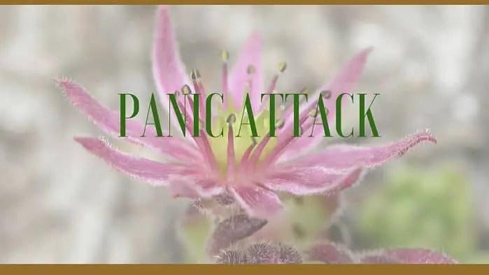 panic attacks herbs