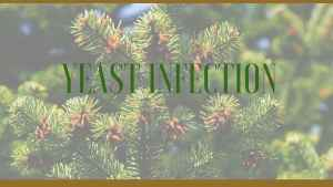yeast infection herbs