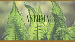 asthma herbal remedies