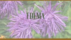 edema herbal remedies