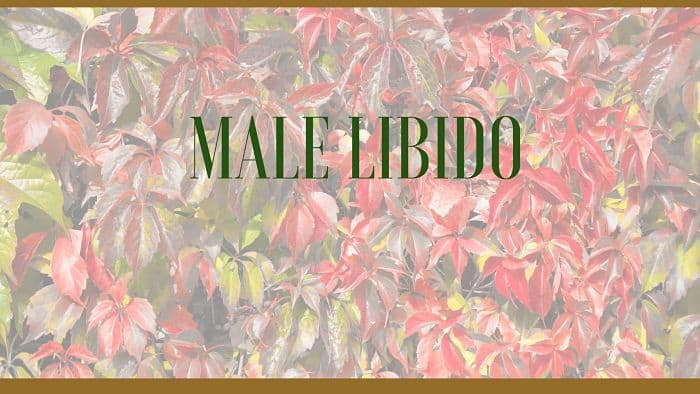 Herbal Remedies to Increase Male Libido