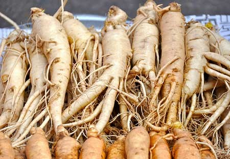 Image Result For What Is Korean Red Ginseng Good For