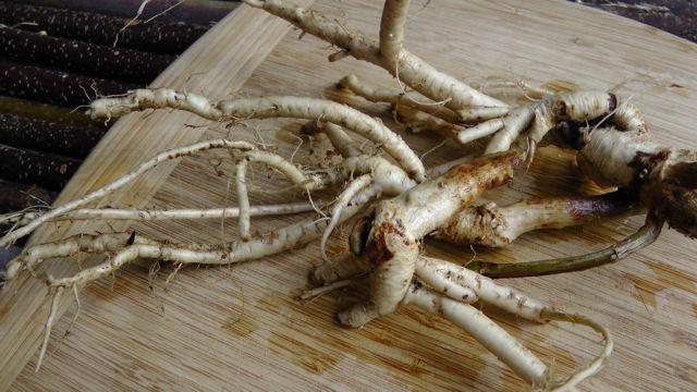 Image result for Astragalus Root