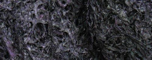 Feuille de nori (hai tai) – 紫 菜